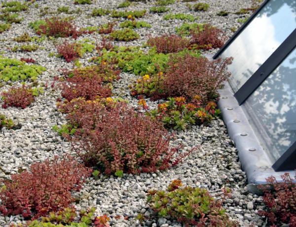 Pflanzen auf dem Flachdach bedürfen regelmäßiger Pflege