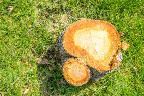 Baum im Garten faellen