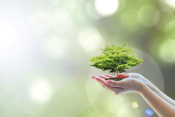 Finanzieller Nutzen und Oekologie
