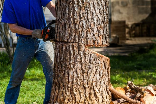 Moderne Faelltechnik Faellung ueber das Holzgelenk
