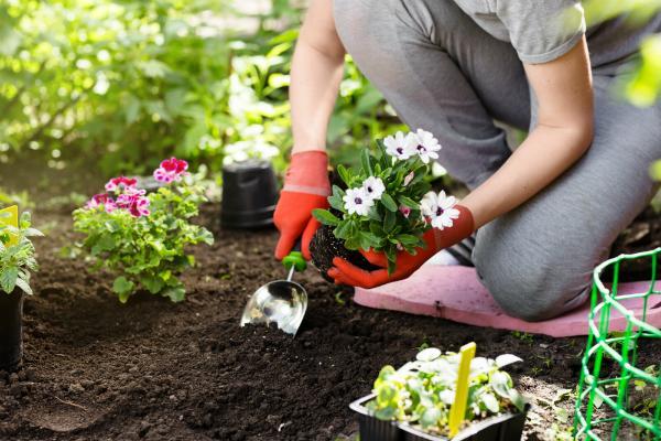 Blumen im Garten pflanzen