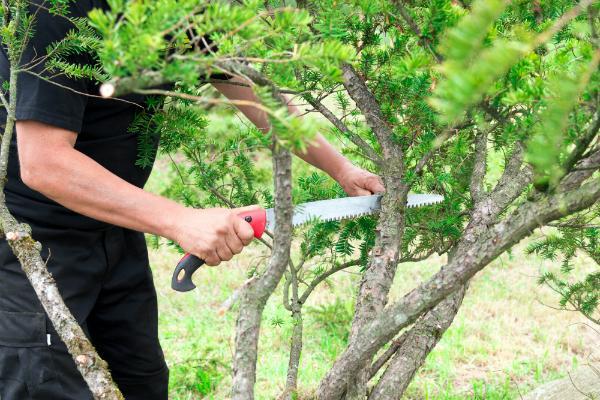 Handsaege als Gartenwerkzeug
