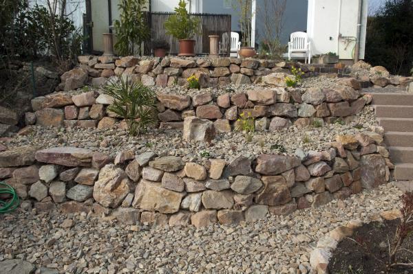 Frisch angelegter Steingarten mit jungen Pflanzen