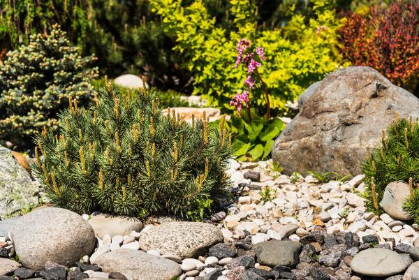 Schoene Komposition aus Steinen und Pflanzen im Steingarten