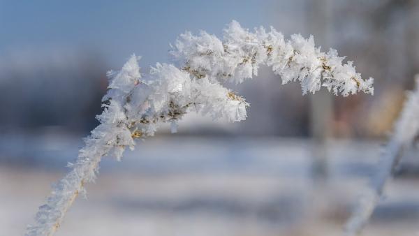 Der Garten braucht auch im Winter viel Pflege