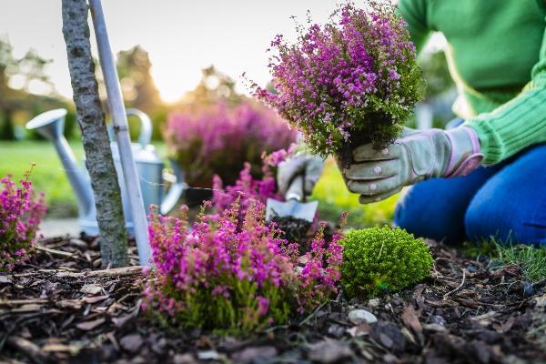 Ziele der Gartenarbeit im Herbst