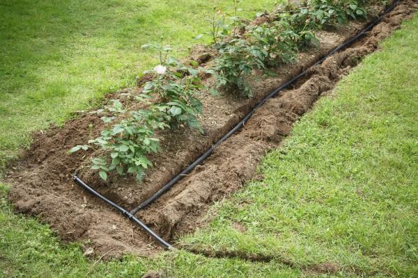 Rings um ein Beet sind Bewässerungsschläuche zu sehen, die in einer aufgegrabenen Furche liegen. Tröpfchenbewässerung im Garten lässt sich auch selbst installieren