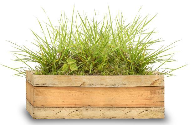 Blumenkasten mit grünen Pflanzen - geeignet für Indoor Garten
