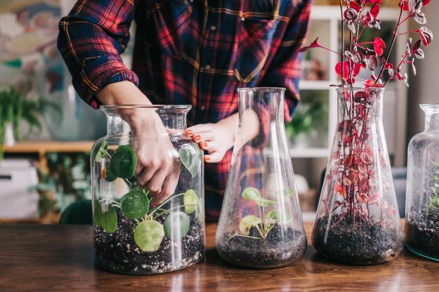 Pflanzen in großen Flaschen - tolle Idee für den Indoor Garten
