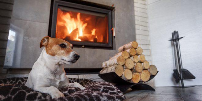 Hund vor Kamin - ökologisch mit Holz heizen