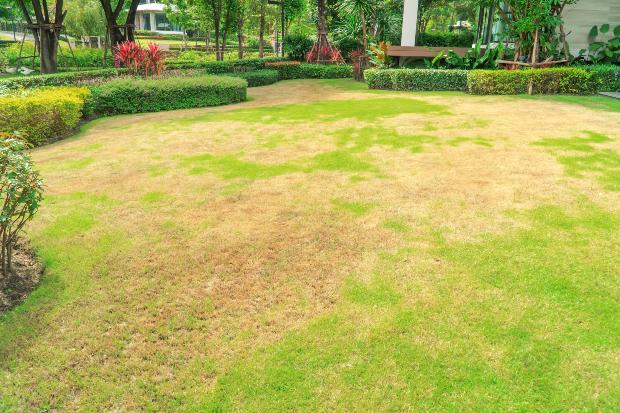 ungesunder Rasen - deshalb den Rasen vertikutieren im Frühjahr