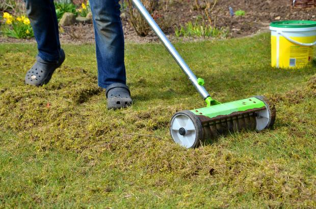 Mann vertikutiert den Rasen - Rasen vertikutieren im Frühjahr