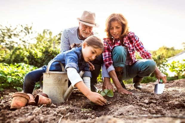 Familie pflanzt Setzlinge - Beet vorbereiten