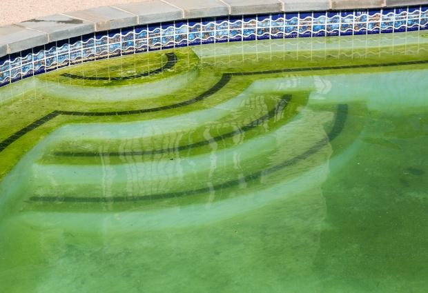 Algenbildung im Swimming Pool - Poolreinigung ist dringend nötig